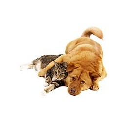 Para Perros y gatos